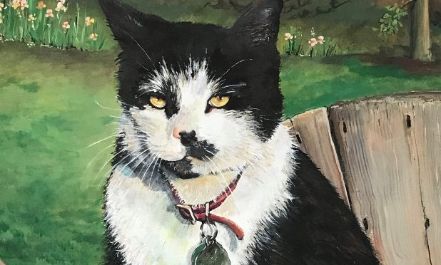 Cat Portrait Tuxedo with Attitude